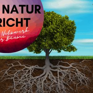 Wissenschaftler erklären, wie Bäume durch ein uraltes Anderswelt-Netzwerk miteinander sprechen - Bäume sprechen miteinander